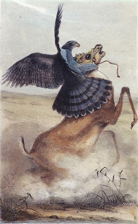 falcon-antelope